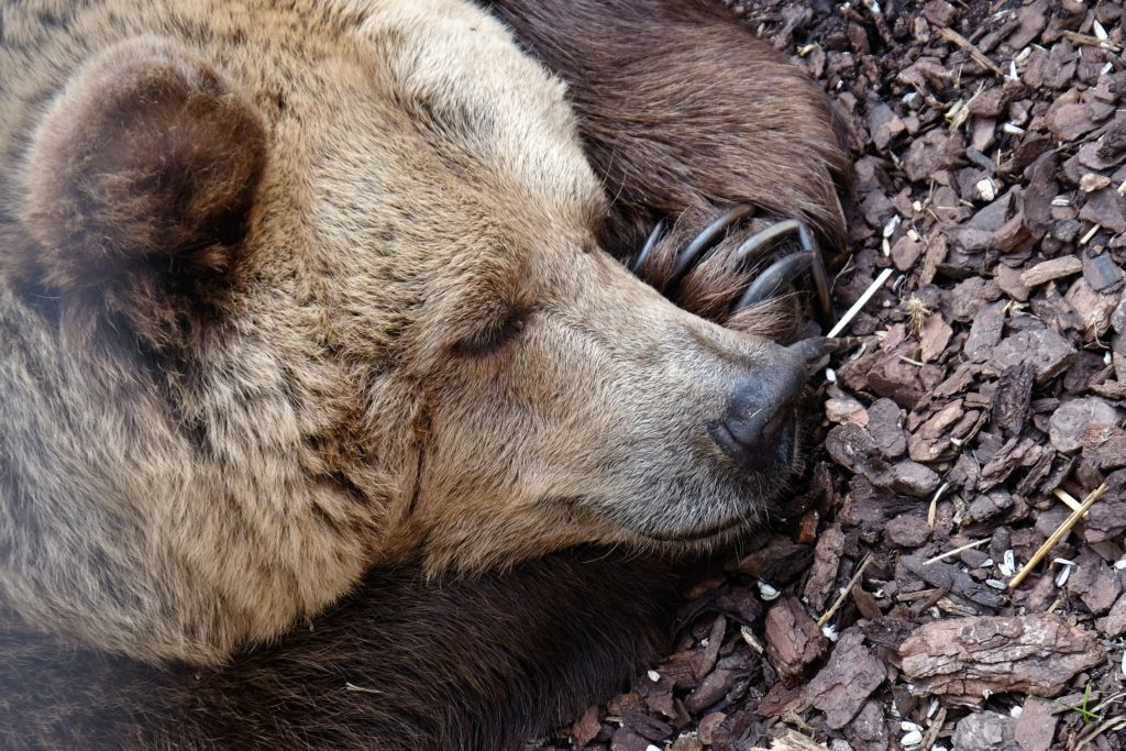 Don't hibernate!